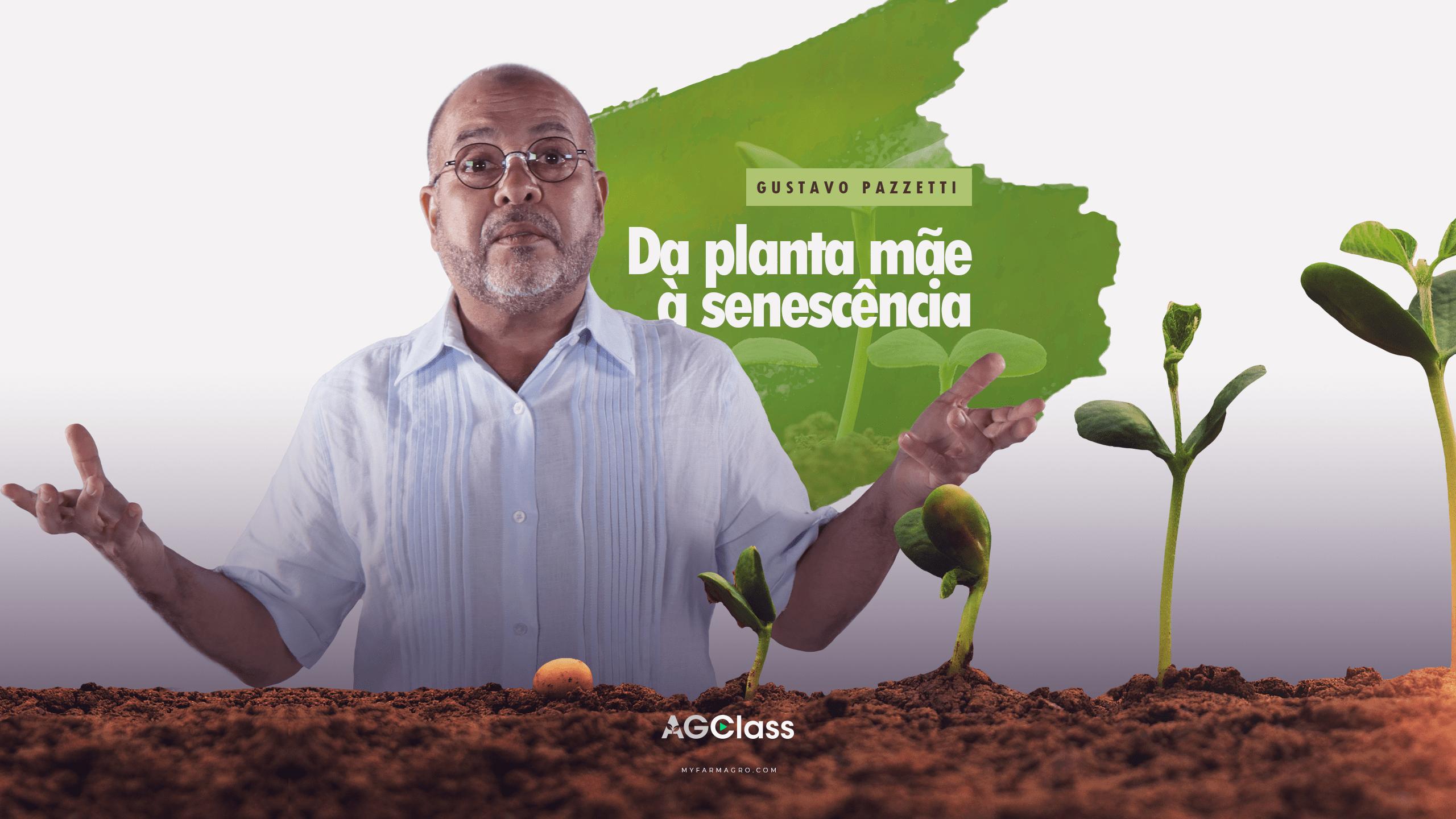 DA PLANTA MÃE À SENESCÊNCIA